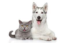 Soapy Dogs, LLC FAQ's